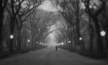 Janek Gwizdala | American Elm